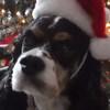 1446307406christmas 2012 bogey