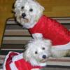 1542665646my santa babies from 2014