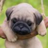 1541602496hanging pug puppy statue
